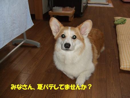 みなさんお元気ですか