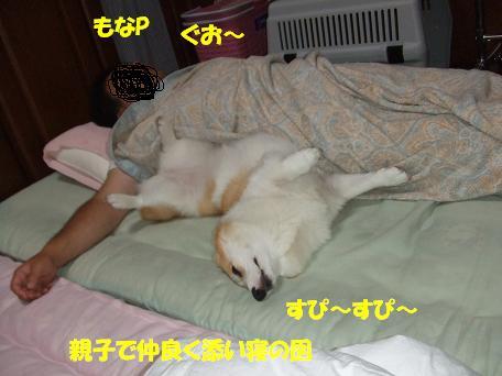 なかよく寝てます
