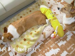紋次郎とバナナ3