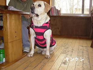 3.28ジプシー賢犬
