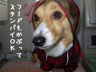 4.27朝 杏