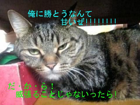 8・29 最強ナナ 5