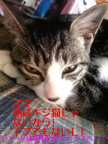 8・30 キジ猫3兄弟 4