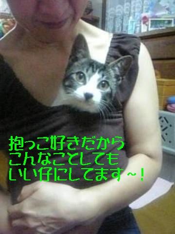 9/15 抱っこ好き