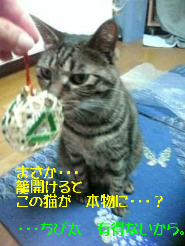 9・30 招き猫・・・ 4