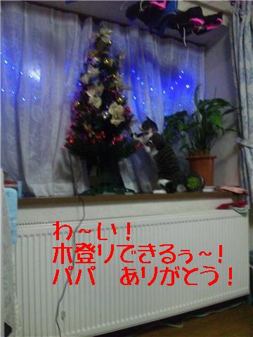 11・23 もうすぐクリスマス 3