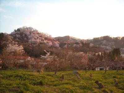 花見山.jpg