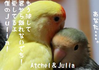 228yorisoikakikaki_convert_20090511213522.jpg