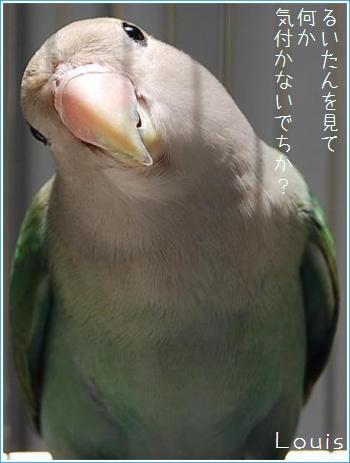62401.jpg