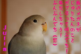 DSC_1854_convert_20090507163703.jpg