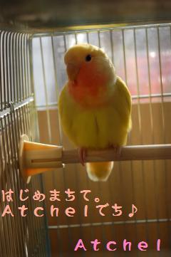 DSC_2212_convert_20090507164505.jpg