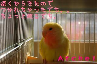 DSC_2219_convert_20090507164607.jpg