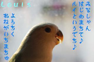 DSC_5385_convert_20090509222209.jpg