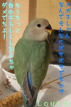 DSC_5466_convert_20090510170946.jpg