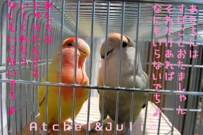 DSC_6011_convert_20090514140256.jpg