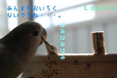 DSC_6133_convert_20090514135818.jpg