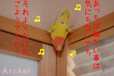 DSC_6192_convert_20090515110735.jpg