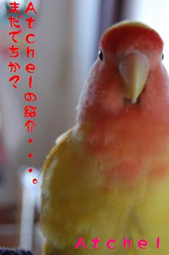 atcelnioudachi_convert_20090507102911.jpg
