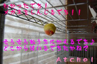 atchelnattoku_convert_20090507103207.jpg