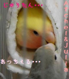 cyuccyu_convert_20090511170619.jpg