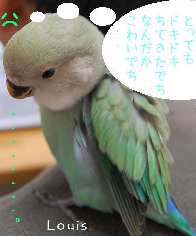 dokidoki_convert_20090516212408.jpg