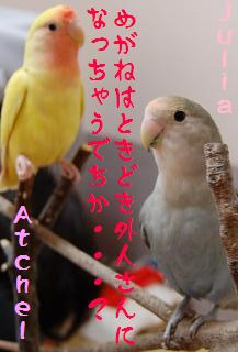 jatomarigi_convert_20090511213636.jpg