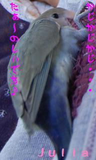 juliakamikami_convert_20090511153919.jpg