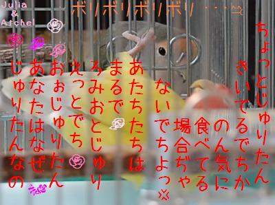 kagogosi_convert_20090515110141.jpg