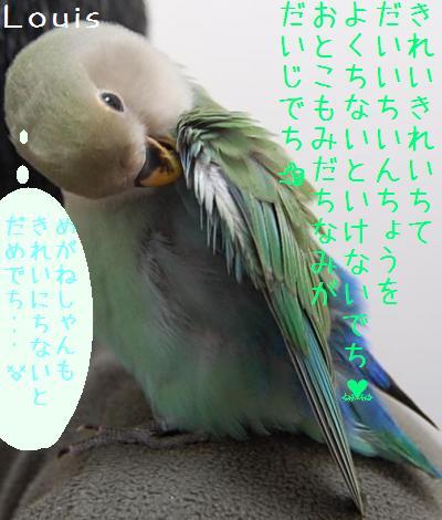 kireikirei2_convert_20090516212603.jpg