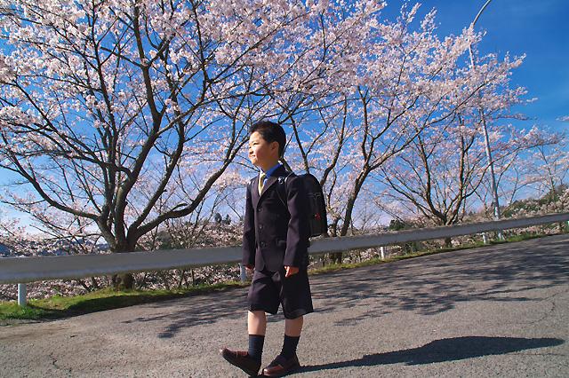 桜と1年生。