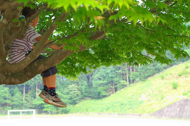 そしてまた木に。