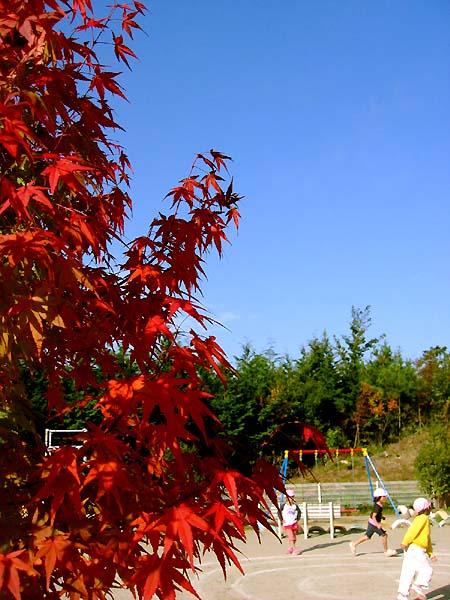 保育所の秋。