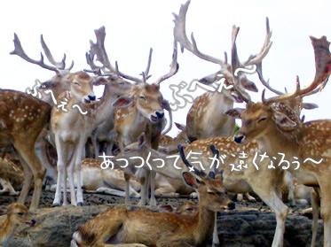 群馬サファリワールド 鹿