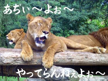 群馬サファリワールド ライオン