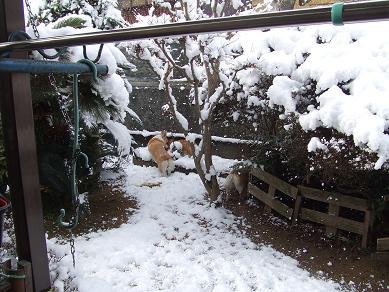 2/24雪1