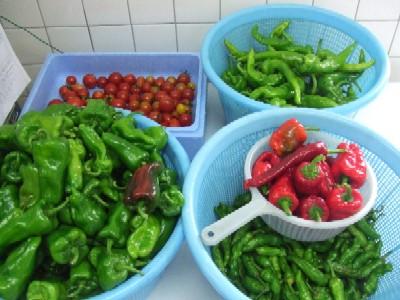 2009_0918朝採り野菜