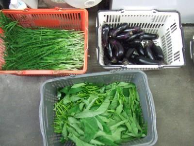2009_0918朝採り野菜その2