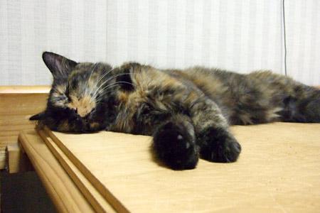 寝るムギ1