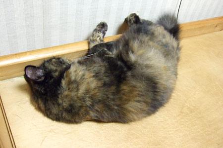 寝てるムギ1