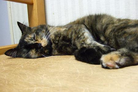 寝てるムギ2