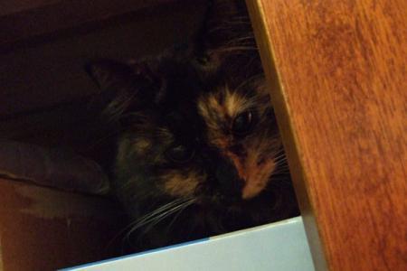 ベッドの下へ隠れるムギ