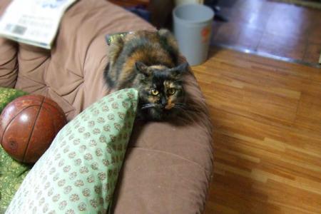 ソファーの上から家族のご飯を観察