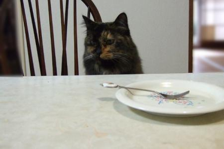 チーズケーキはもうない