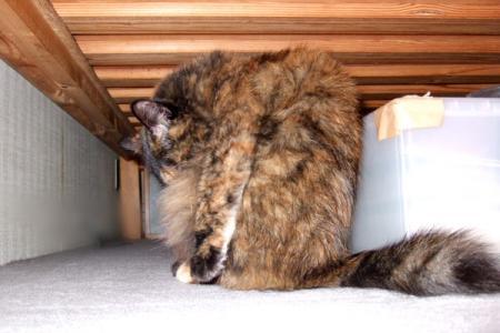 ベッドの下でグルーミング