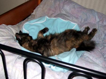 仰向けで寝ている