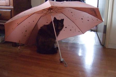 傘とムギ1