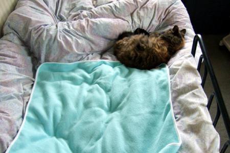 寝ているムギ1