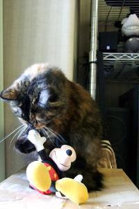 マウスと遊ぶ