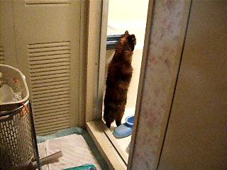お風呂を覗くムギ
