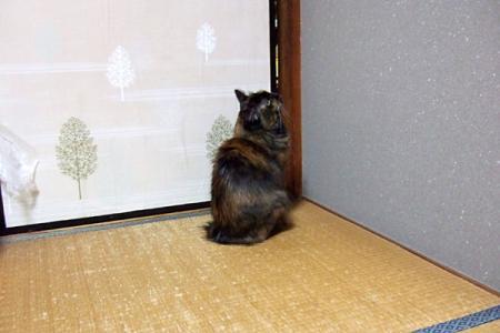 扉が開かない